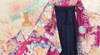 A067 赤紫 ストライプ牡丹と菊
